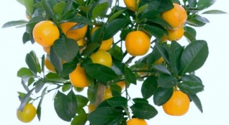 How to grow oranges from seeds
