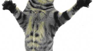 Как отучить кота царапаться