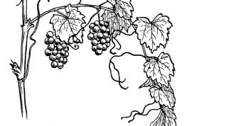 Как рисовать виноград