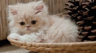 Как научить кота ходить в лоток