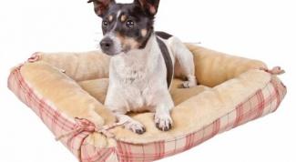 сшить собаке лежак