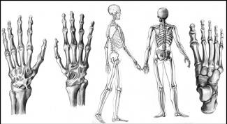 Как рисовать скелет человека