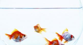 сделать воду в аквариуме прозрачной
