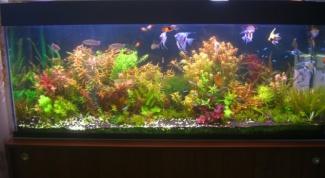 How to disinfect aquarium