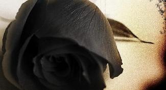 сделать чёрную розу