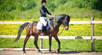 Как научиться ездить на лошади