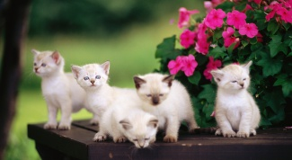 Как кормить котят без кошки