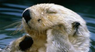 Как понимать характер взаимоотношений животных с окружающей средой
