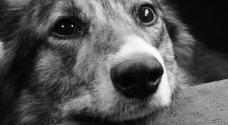 Как сбить температуру собаке