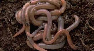 Как сохранить червей