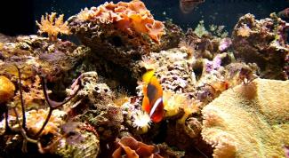 Как нарисовать подводный мир
