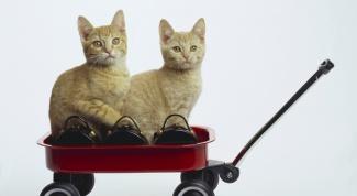 Как перевезти кошек на самолете