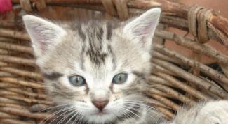 Как приучить котенка спать одному