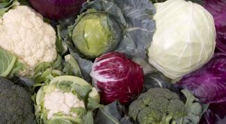 Как отварить капусту
