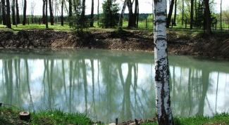 Как построить пруд для разведения рыб