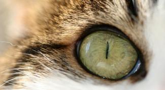 How to treat eyes cat