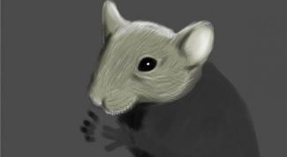 Как нарисовать мышонка