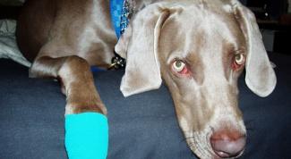 How to treat dog paw