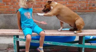 Как научить собаку к команде
