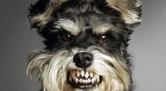Как лечить укус собаки