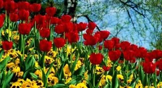 Как подбирать сочетание цветов