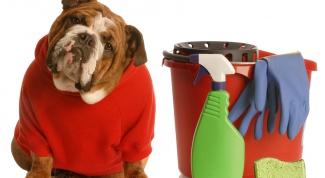 Как избавиться от собачьего запаха