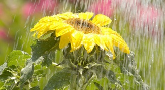How to soften water for watering flowers