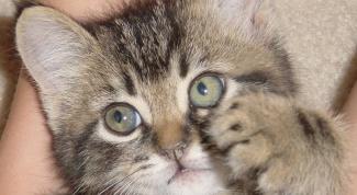 Как отучить котенка кусать руки