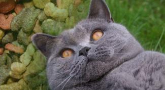 Как кормить стерилизованных кошек
