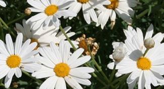 Как охранять растения
