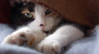 Как делать уколы котам