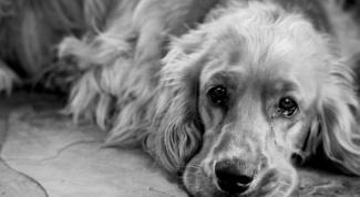 Как лечить отравление у собаки