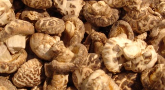Как выращивать грибы шиитаке