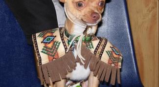 Как назвать собаку-чихуахуа
