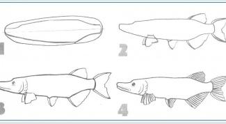 Как нарисовать щуку