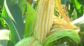 How drinking brewed corn silk