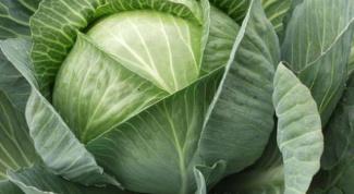 Как снять листы с капусты
