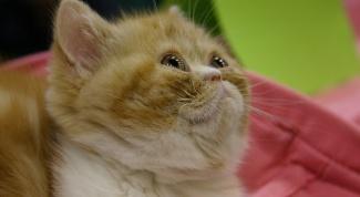 Как определить, что у котенка глисты