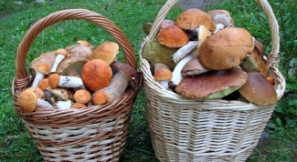 How to grow mushrooms in the country