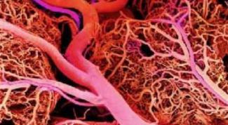 Как почистить кровеносные сосуды