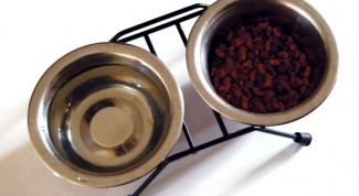 How to choose cat food
