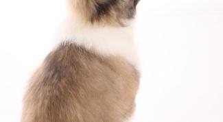 Как отучить щенка кусать за ноги