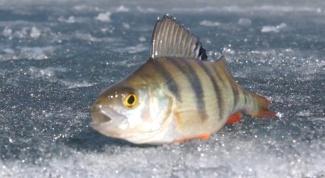 Как поймать в реке рыбу