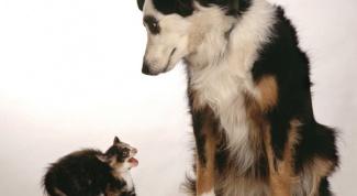 Как воспитать идеальную собаку