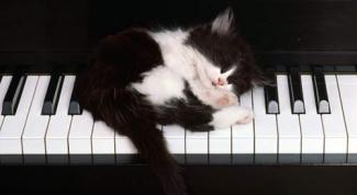 Как получить авторские права на свою песню