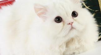 Как вывести шерсть у кошки