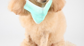 Как лечить рану у собаки