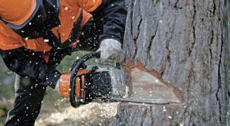 Как спилить дерево бензопилой