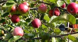 Как определить урожайность