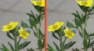 Как улучшить четкость фотографии в фотошопе